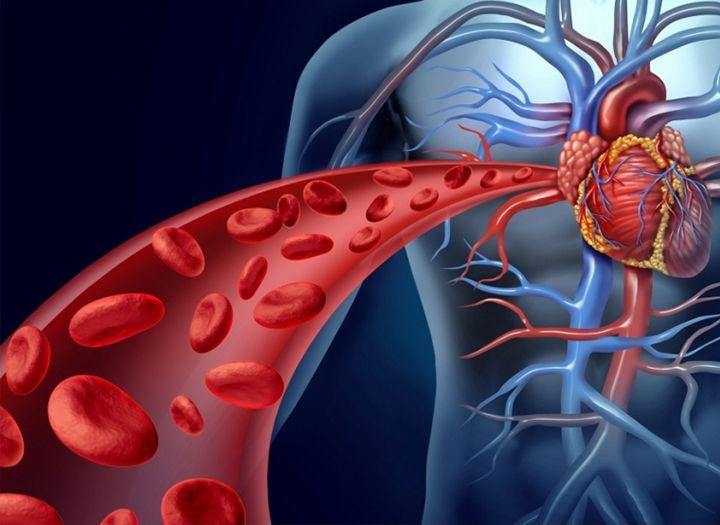 Tested sejtjeinek táplálása – erek